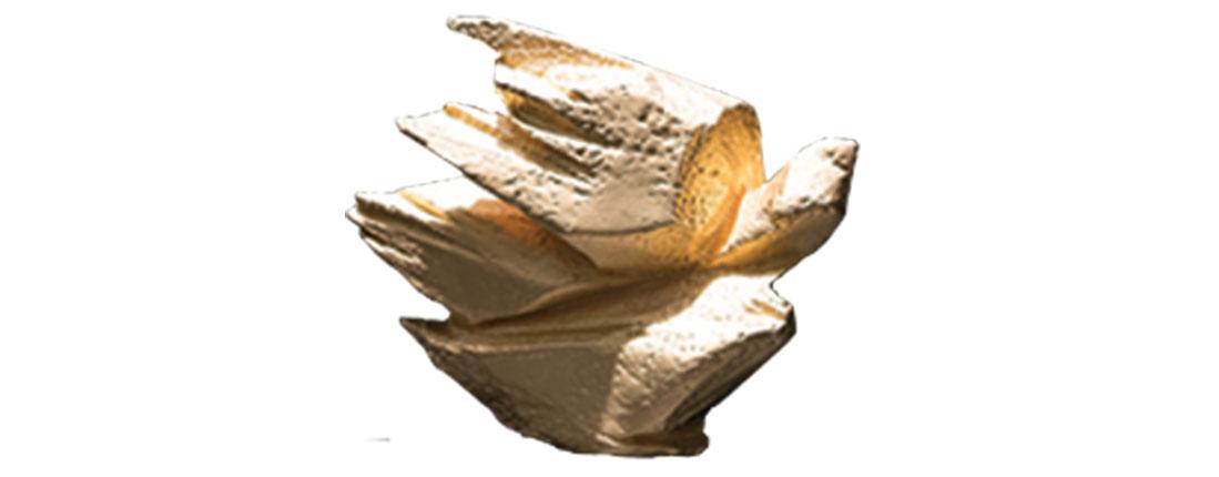 Rejuve Foundation